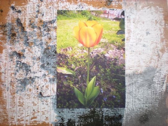 Image for Tulip Studies